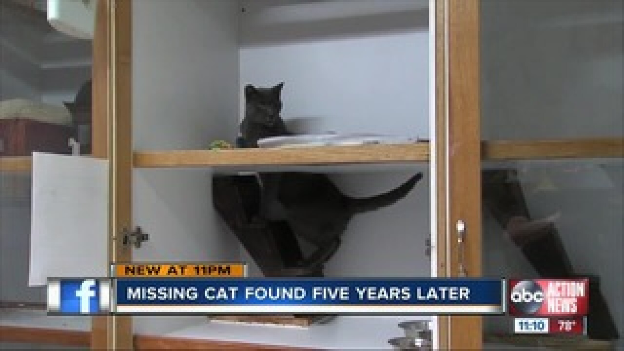 Missing cat found five years later