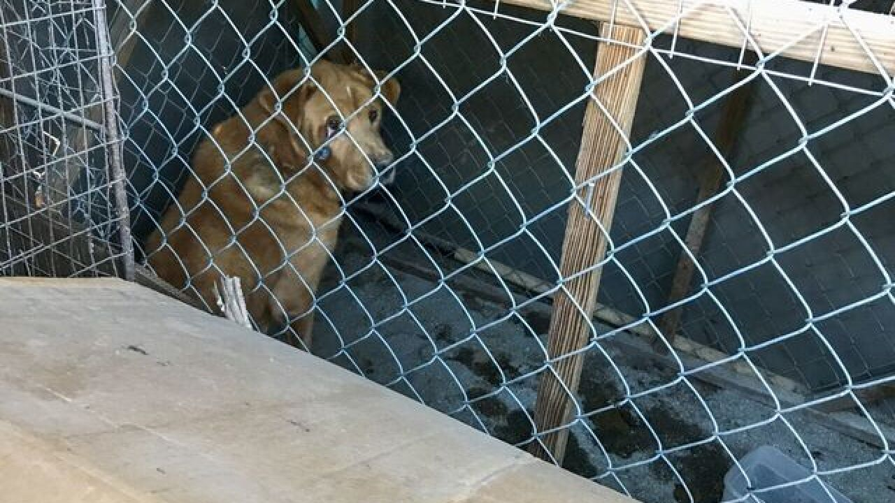 14 Animals Abandoned In Horse Trailer Rescued