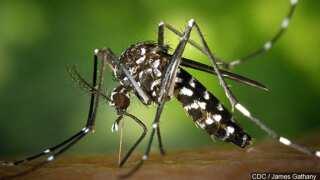 Mosquito spraying begins tonight on North Beach