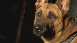 Discussion surrounding drug dogs on Pueblo D60 campuses