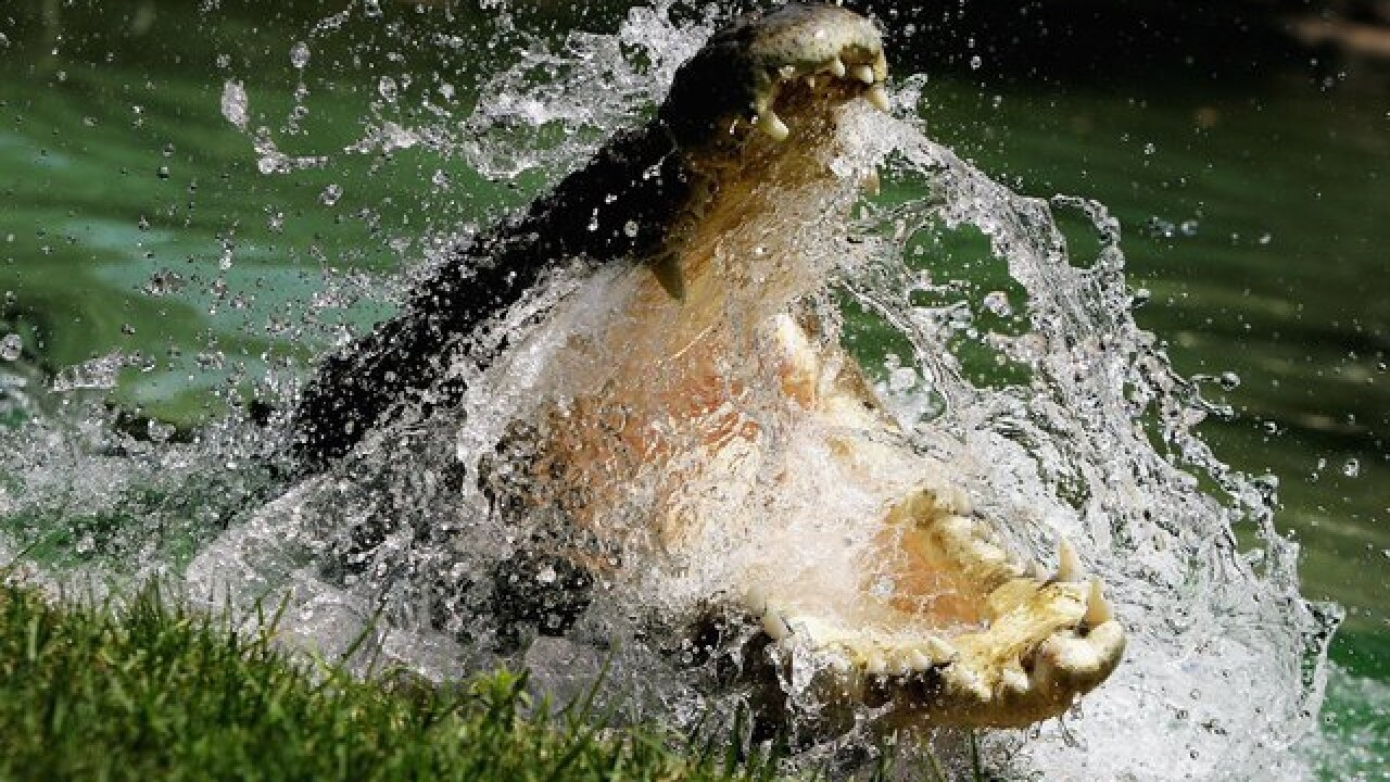 Crocodile attacks, kills pastor performing baptism in lake