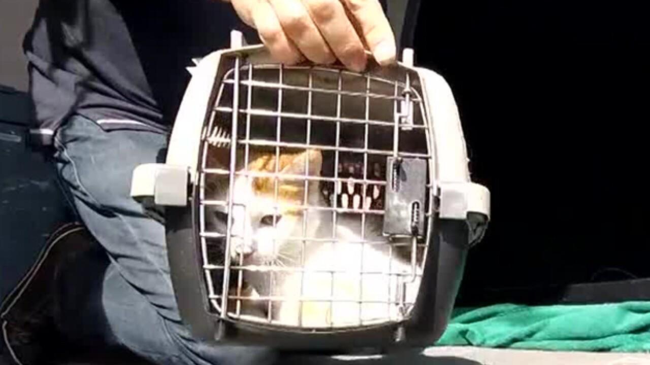Nashville Humane Association Helps animals displaced by Hurricane Michael