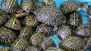 turtle-1-ht-er-191020_hpMain_4x3_992.jpg