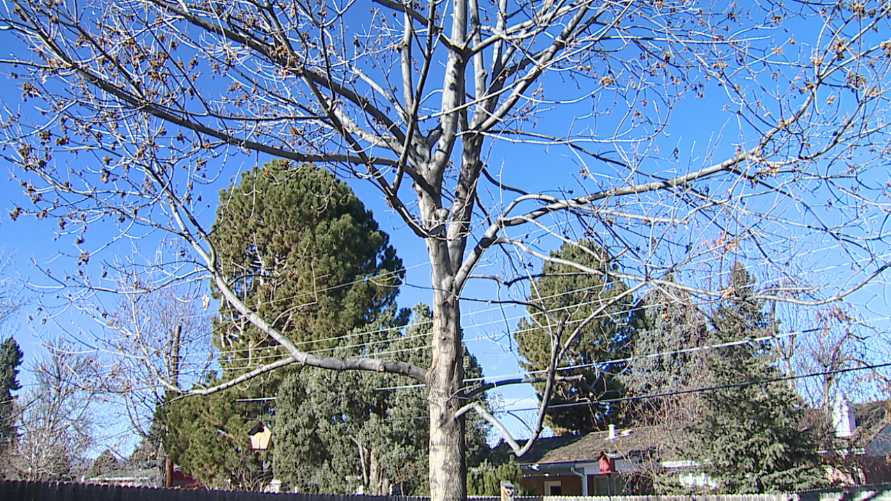 tree in denver.jpg