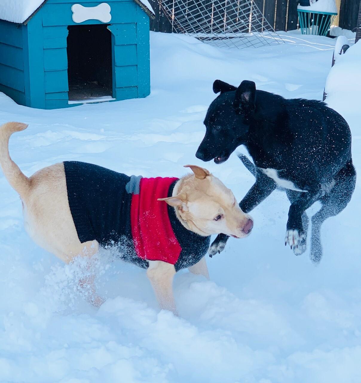 snow pups 11.jpg