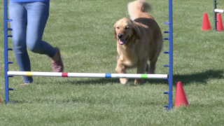 4-H dog agility program builds bonds and friendship between competitors