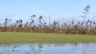 Timber damage from Michael estimated at $1.3 billion.JPG