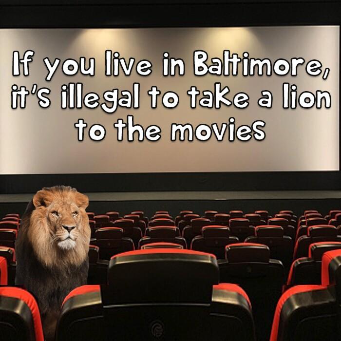 Lion movies 3jpg.jpg