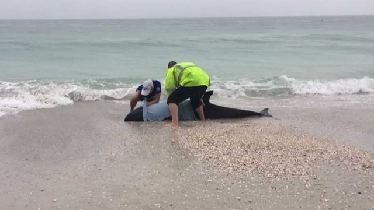 Police officers help rescue beached whale