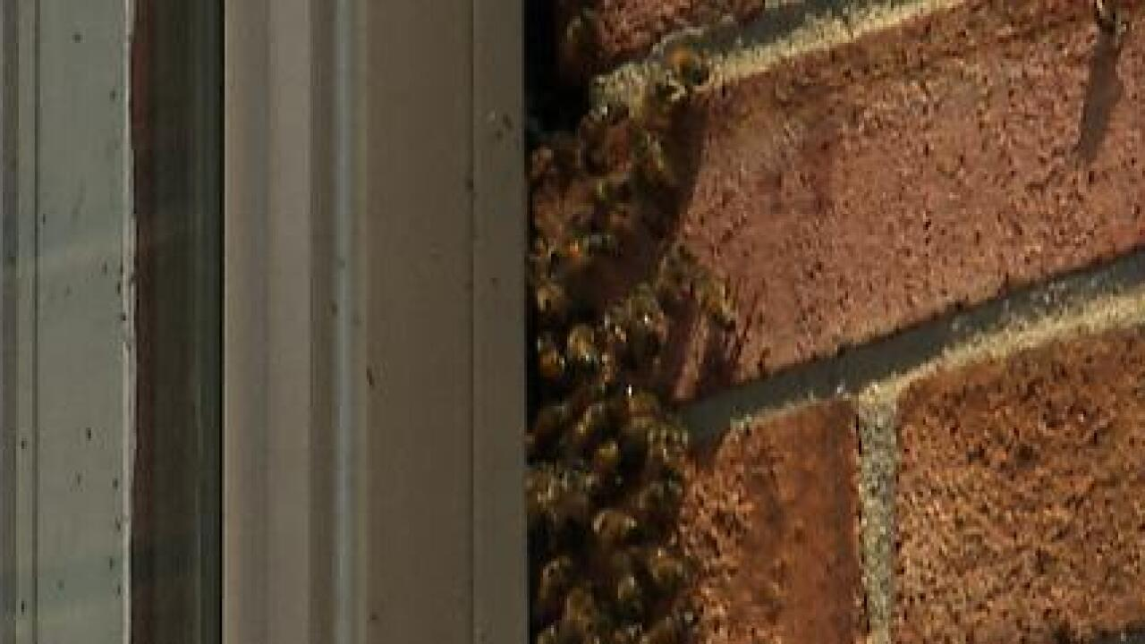 Nearly 30,000 bees found living above Williamsburgbakery