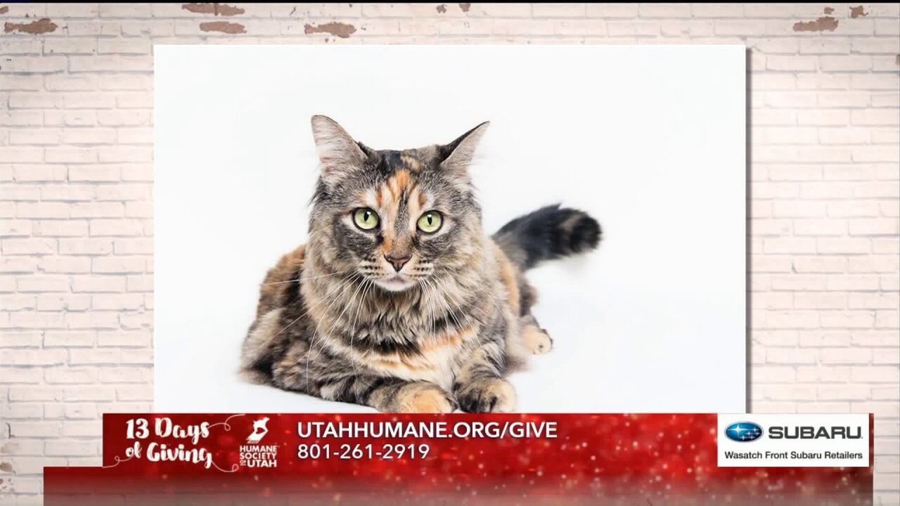13 Days of Giving: Wasatch Front Subaru Retailers team up with Humane Society of Utah