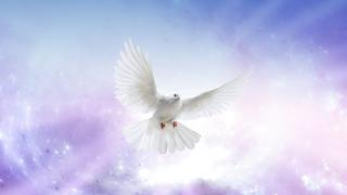Obituary - Dove