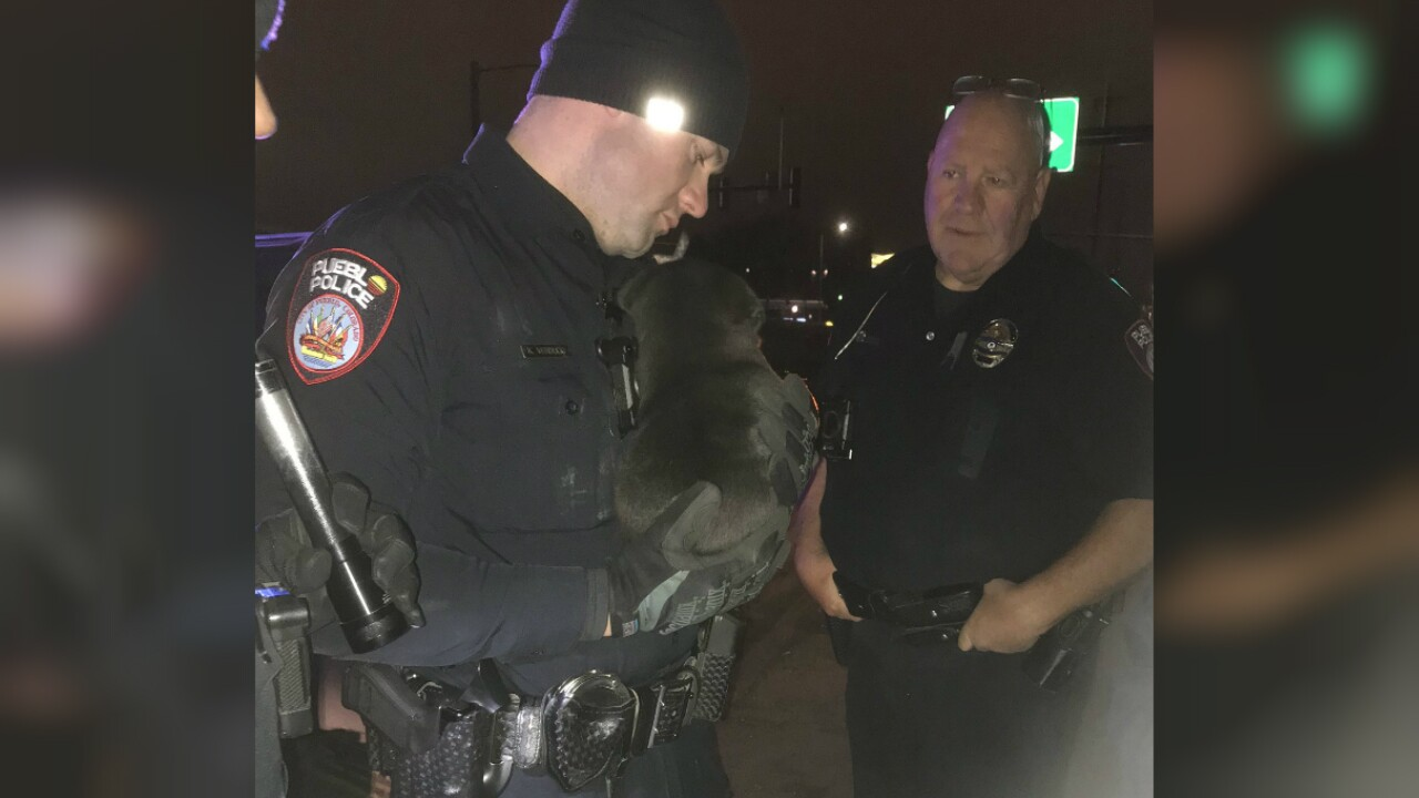 Pueblo police cited a man who they say was high on methamphetamine and threw a puppy against a vehicle