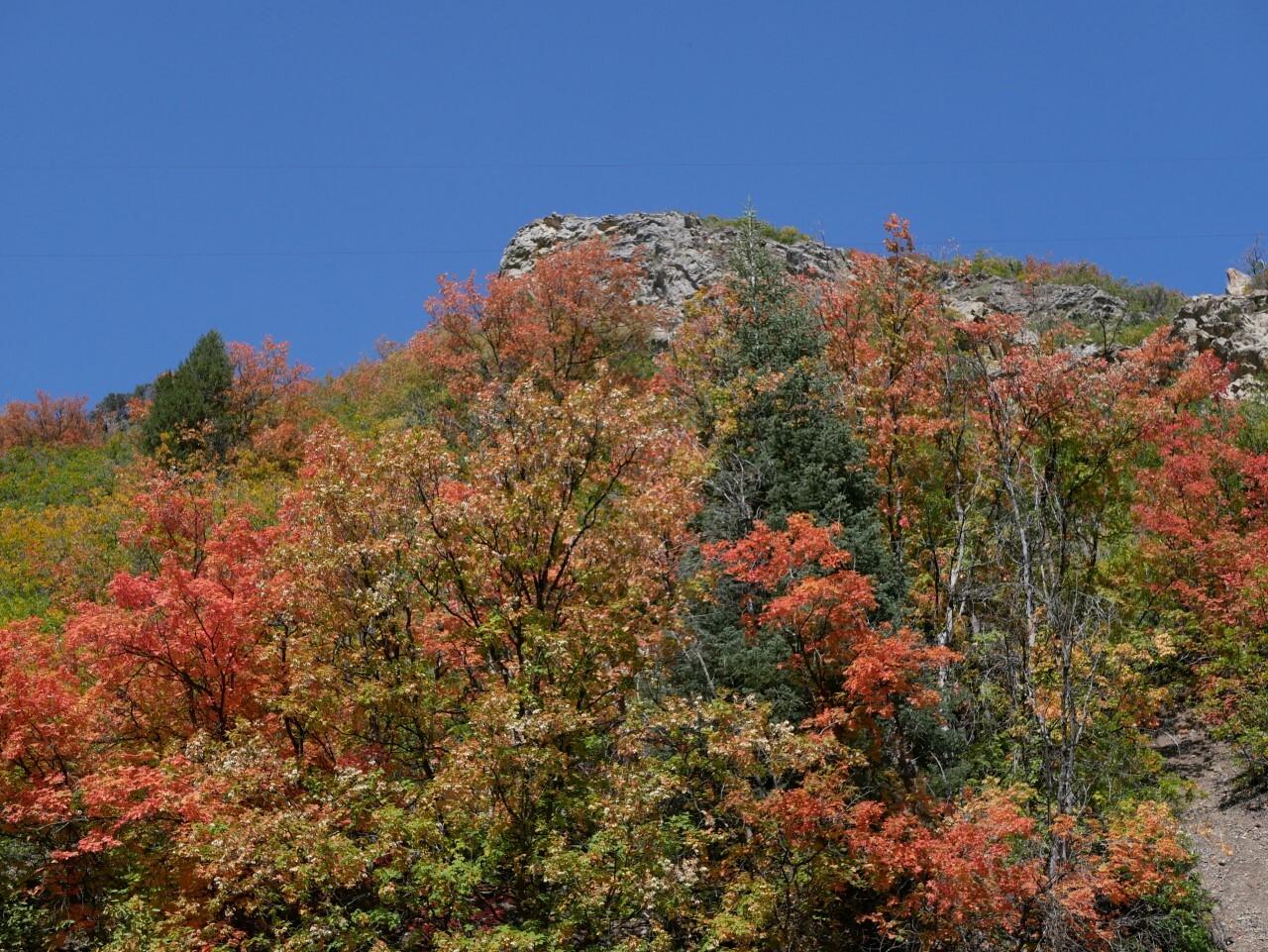 Marguerite Roberts Millcreek Canyon (2).jpg