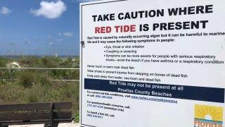 red-tide-pinellas-county-WFTS-HOLLENBECK-PKG.jpg