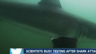 Scientists believe great white shark bit boy in San Diego