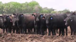 Montana Ag Network: Working to keep water clean and ranchers in business