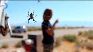 Uniquely Utah: SpiderFest! at AntelopeIsland