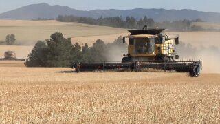 Montana Ag Network: Law aims to give Montana farmers global market advantage