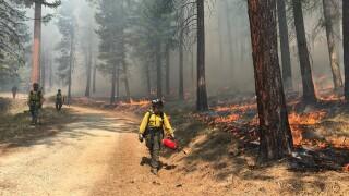 BNF Prescribed Fire