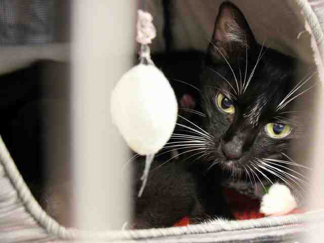 Adoptable pets from Maricopa County Animal Care and Control and Arizona Humane Society (8/30)