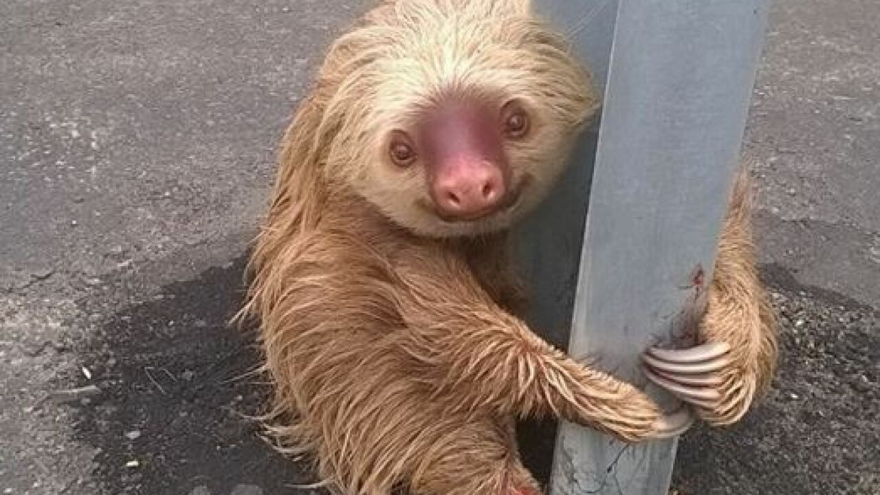 Photos of officer helping sloth cross road in Ecuador goes viral
