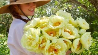 The 'lemon Chiffon' Peony Is The Dreamiest Summer Bloom