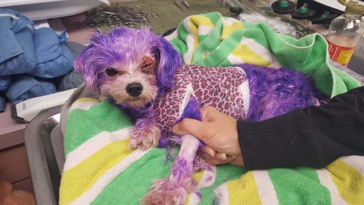 Human hair dye severely burns dog