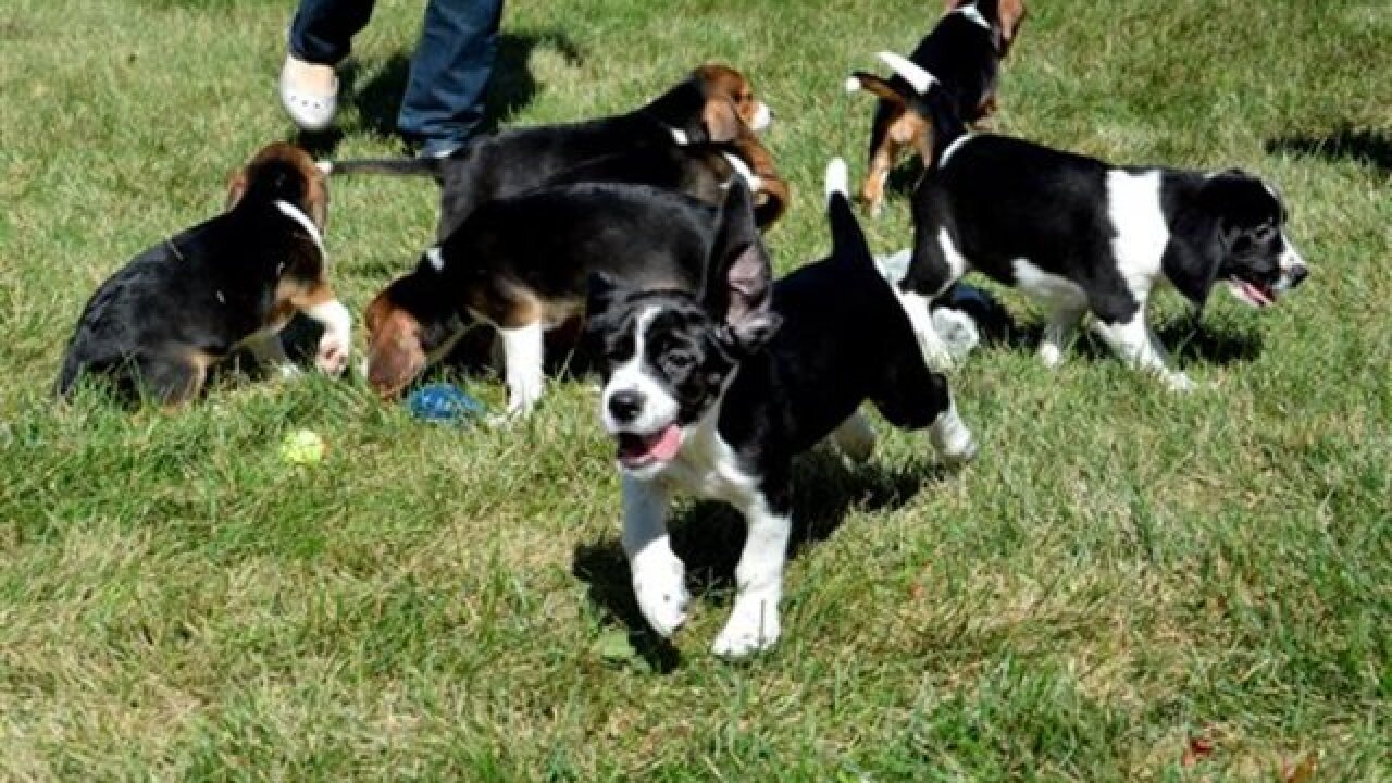 7 mutts become first test-tube puppies in world