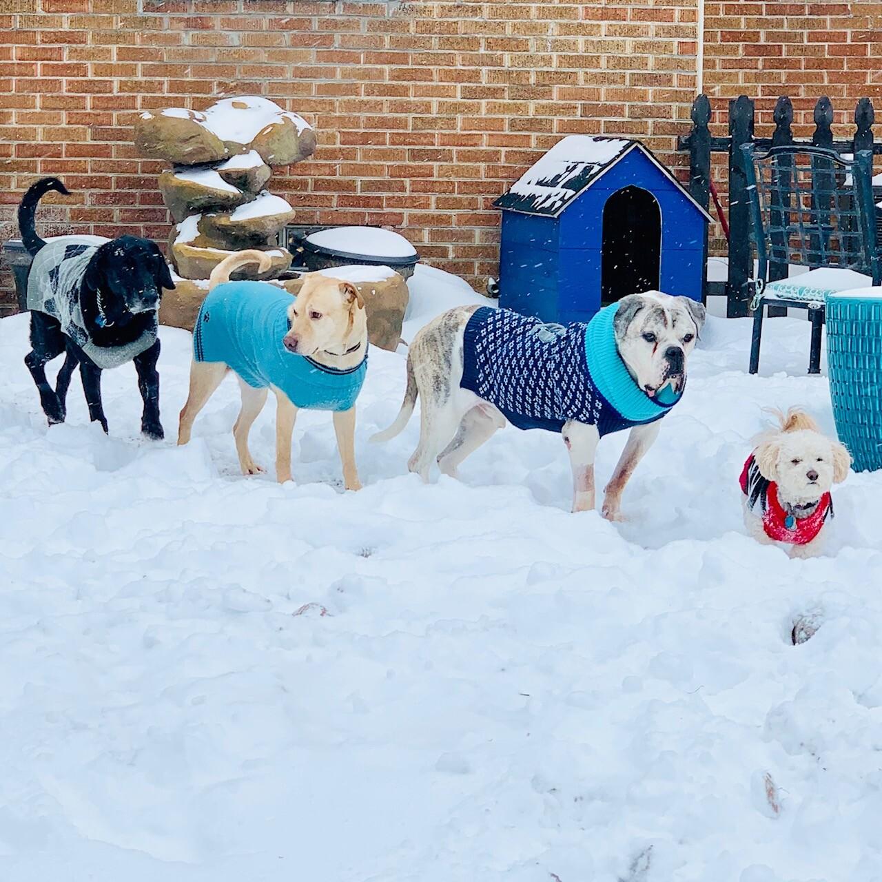 snow pups 2.jpg