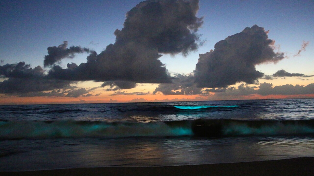 What's causing the glowing waves at the Virginia BeachOceanfront?