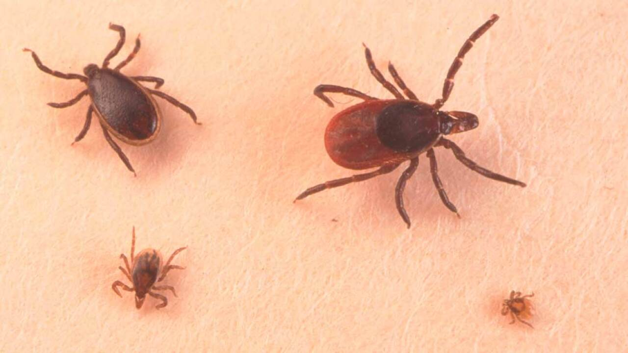 A Close Up Of An Adult Female, An Adult Male, Nymph And Larva Tick (file photo)