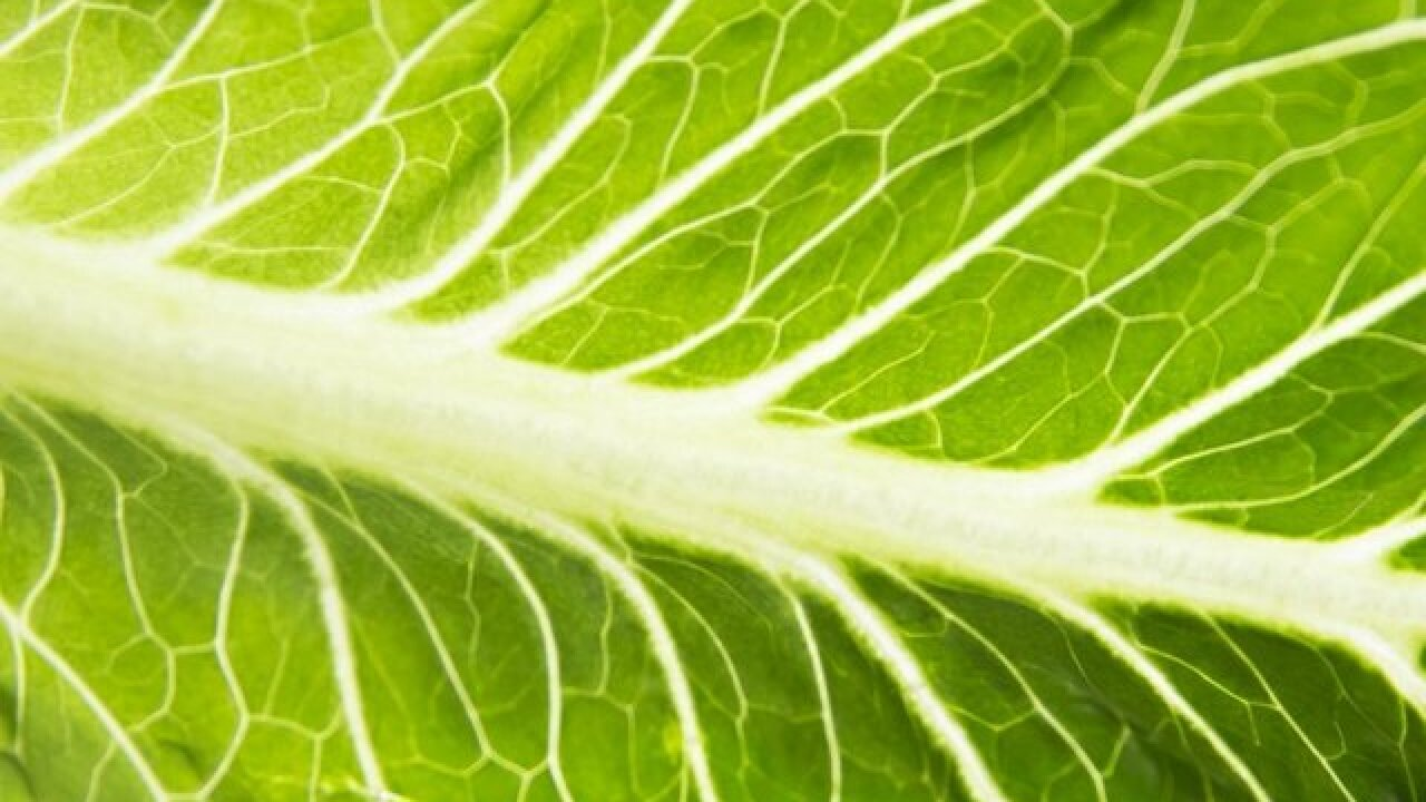 Douglas County has first case of E.Coli linked to romaine lettuce