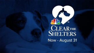 Clear The Shelters Web Header.jpg