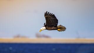 eric english eagle.jpg