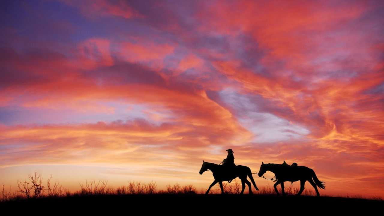Cowboy in the sunset (MTN News)