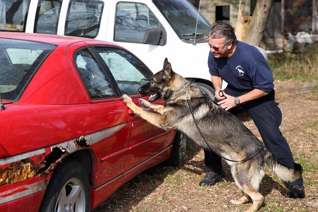 GALLERY: MPD welcomes 2 new K-9 officers