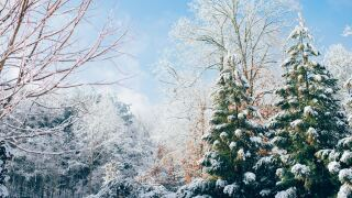 File image of snow covered trees.