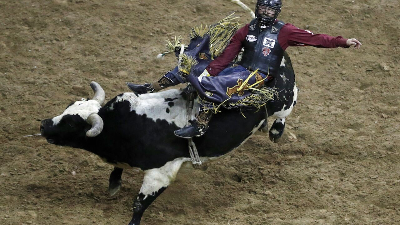 Bull riding may be 1st US professional sport to welcome fans