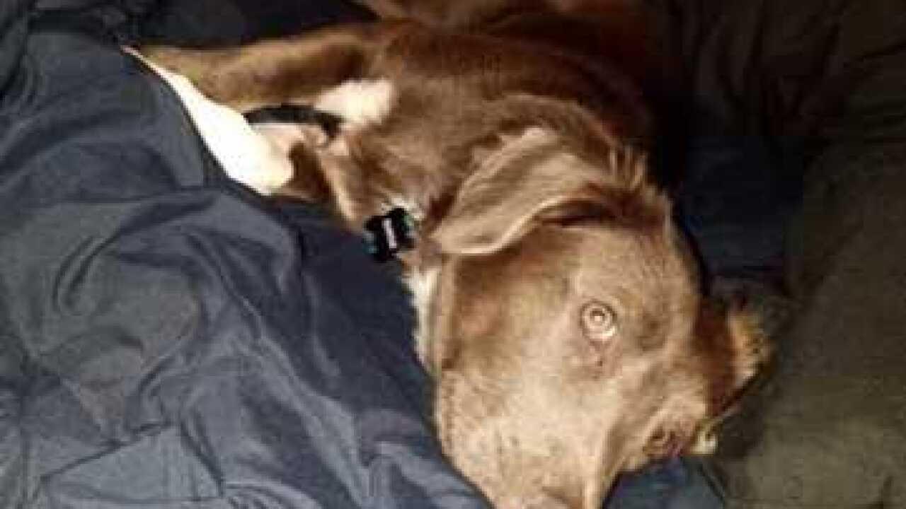 Paramedic rescues dog during Harvey response