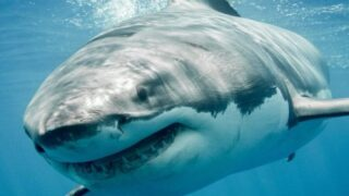 Shark Week Is Here — Here Are Some Highlights From The Schedule