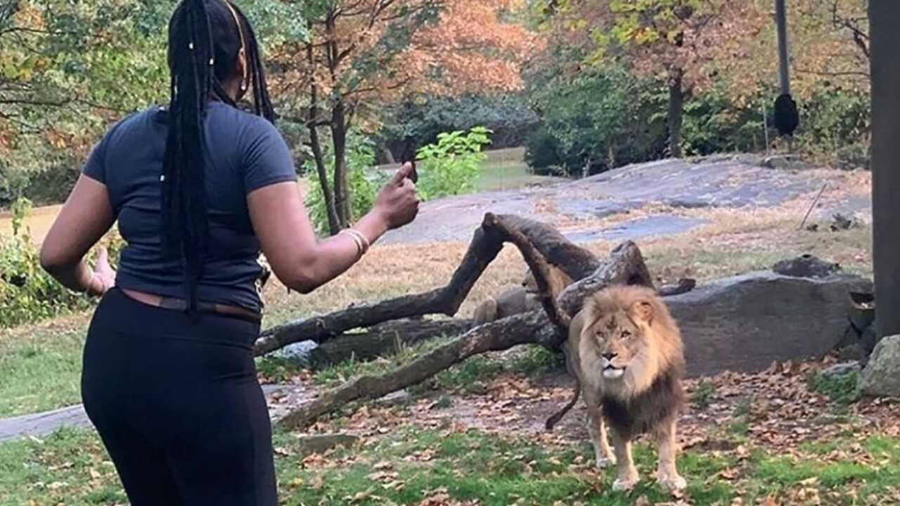 Woman accused of entering Bronx Zoo lion enclosure has been arrested