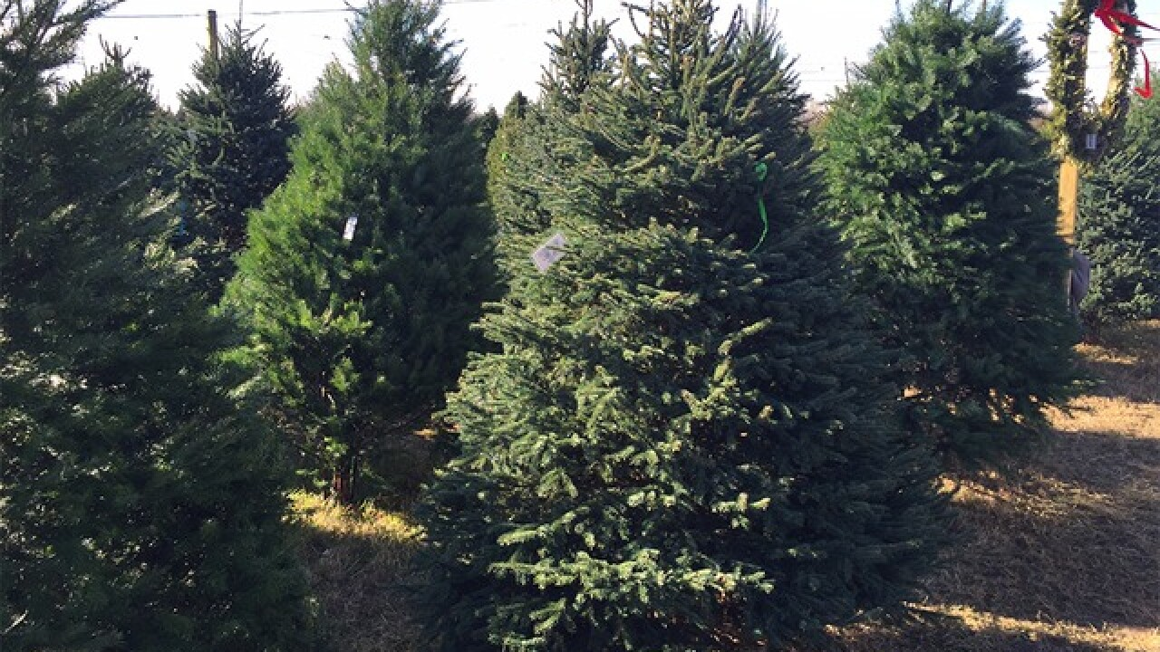 Christmas trees stolen in Sterling Heights