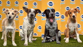 Puppy Bowl Gallery.jpg