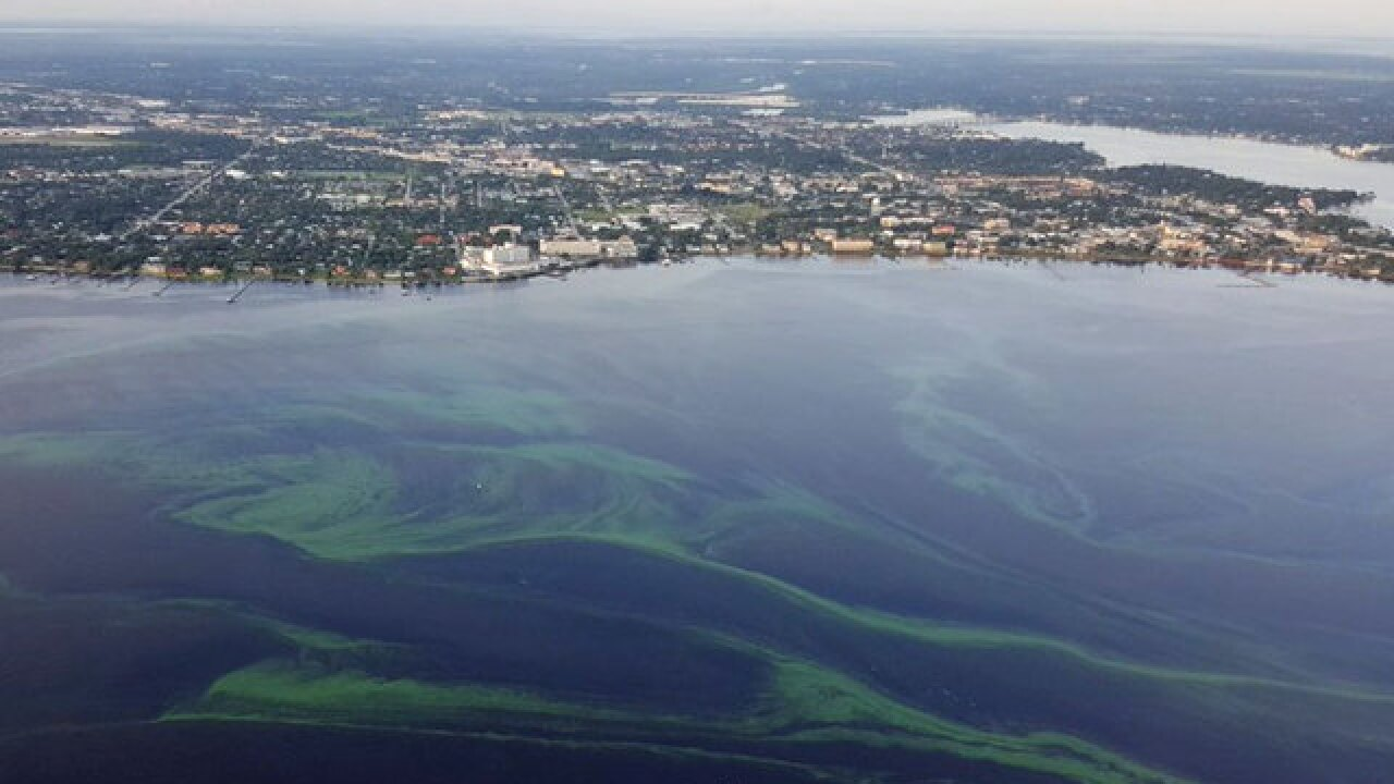 Interactive map shows locations, types and toxicity levels of algal bloom samples in Florida