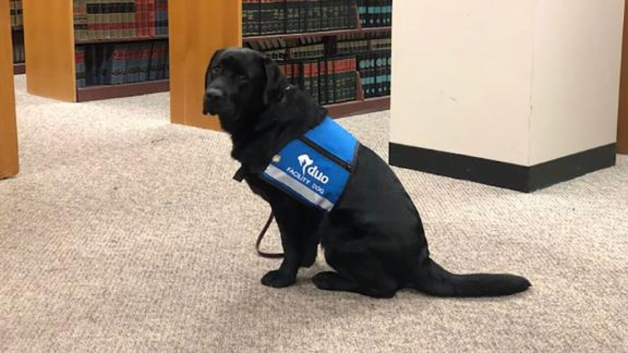 A state attorney's office hired its first comfort dog to help child sexual assault victims