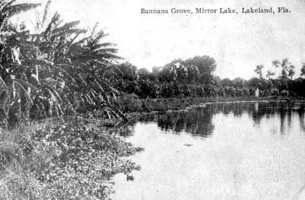 Banana grove at the edge of Mirror Lake.jpg
