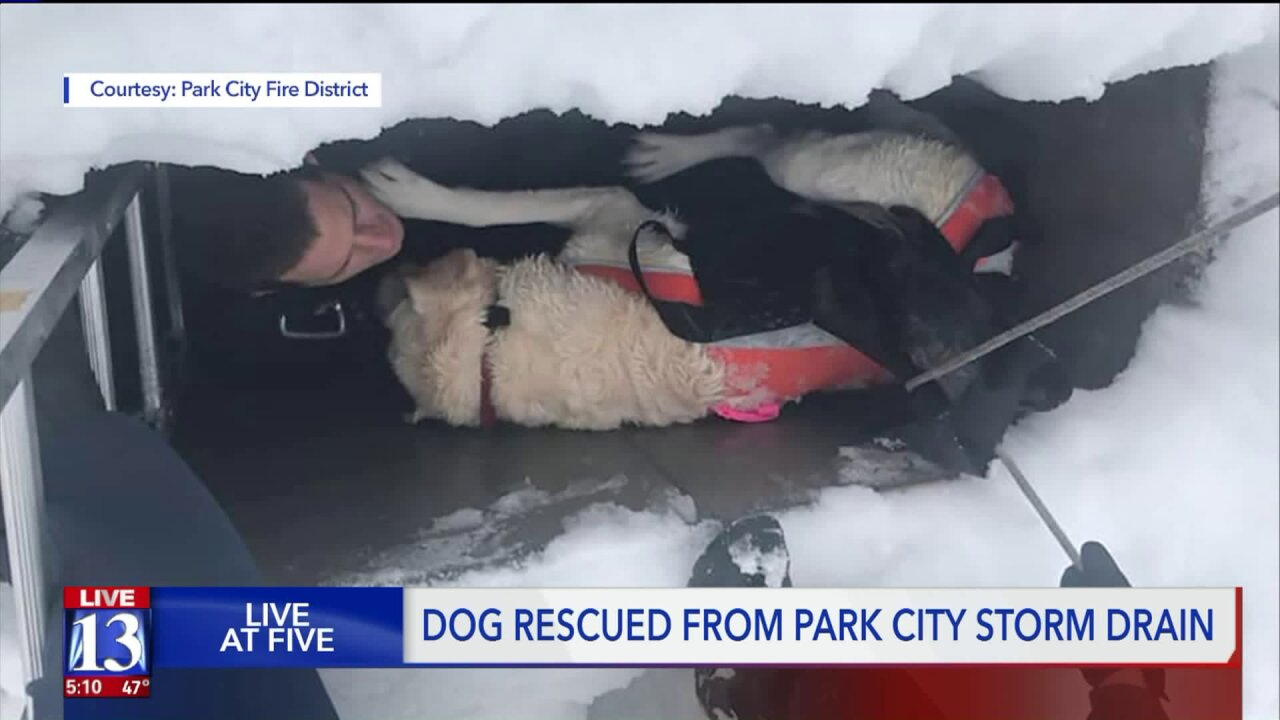 Firefighters rescue dog that fell into storm drain in Park City