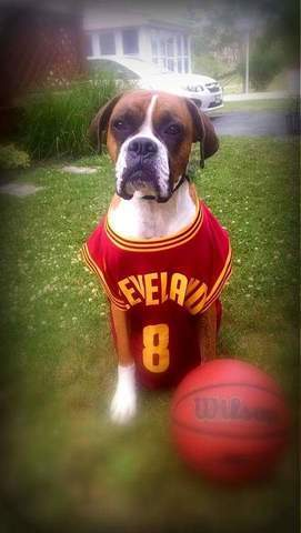 PHOTOS: Pets all dressed up in Cavs gear