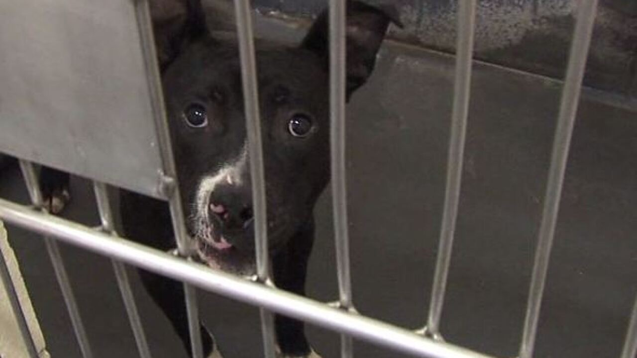 IACS offering free adoptions for $10 in supplies